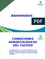 Condiciones Agroecologicas y Manejo de La Nutricic3b3n Del Cultivo Del Plc3a1tano