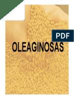 Oleaginosas. Generalidades