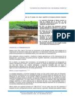 Estadísticas a Propósito Del Día Mundial Forestal