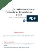 Clase 5.- Colonizacion Bacteriana Primaria y Secundaria. Biofilm