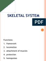 Skeletal System Overview PPT