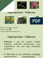 Angiospermas - fabaceae