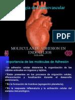 4Molecs. Adhesion en Endotelios