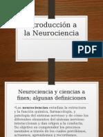 Cerebro Exposicion -1
