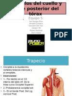 Musculos de Cuello y Parte Posterior Del Torax