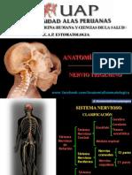 Nervio Trigemino.pdf