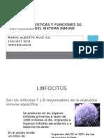 Funciones de las células linfoides