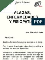 Plagas, Enfermedades y Fisiopatias