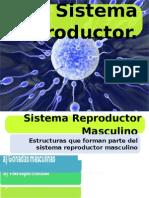 Aparato_Reproductor (Masculino y Femenino)