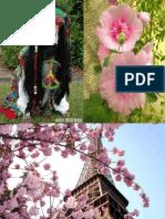 Blumen Und Haustiere