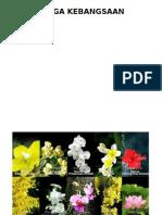 Bunga Kebangsaan Asean