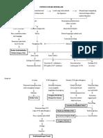 Patofisiologi Sh