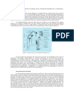 Principios Del Diagnóstico Renal en El Paciente Pediátrico y Neonatal