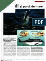 Delfinii Si Porcii de Mare