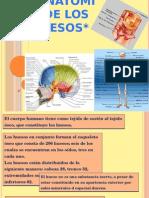 Anatomia de Los Huesos III