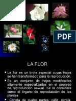 7. La Flor