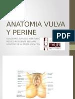 Anatomia Vulva y Perine Mier