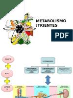 1 Pres F y Metab de Los Nutrientes