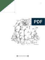 Lophophora williamsii EDITADO
