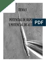 Potencial de Reposo y Potencial de Accion.pdf