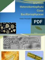 Bacillariophyta.
