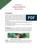 Informe  2 de Cyanophyta