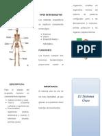 Sistema Oseo - Triptico