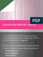 Calcificacion Del Hueso