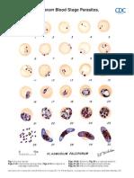 Malaria Comparison p3-6