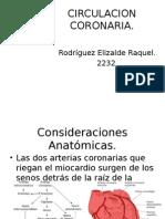 CIRCULACION CORONARIA