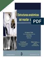 Anatomia+radiografica+superior