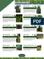 Evergreens Catalog