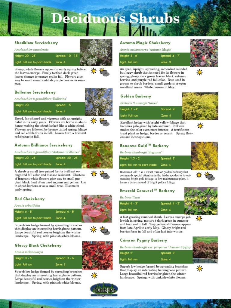 Shrubs Catalog Rose Hedge
