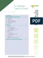 embriologia e ingeneria tisular.pdf