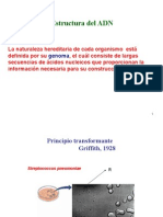 Clase 7 Estructura Del Adn