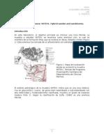 Petrografía de rocas Hibridas-Arenisca Lion
