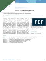 Melanocytes