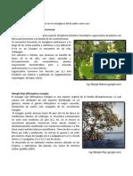 Taxonomía de los manglares