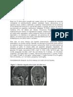 CASO CLÍNICO  1 sem endocrinologia.docx