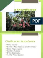 Ancardiaceae modificado
