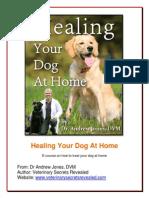 Healing Your Dog