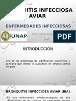 Bronquitis Infecciosa Aviar-susan