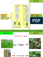 epidemiologie plante