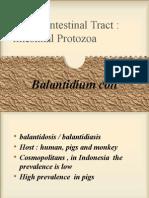 Balantidium Coli 14