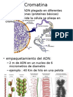 Cromatina Cariotipo Mitosis