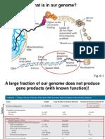 Lecture 3 - Genomes and Transcription