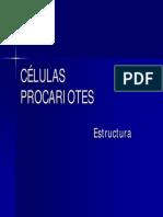 100 Celulas Procariontes 55p