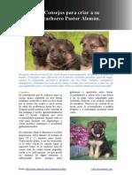 Consejos Para Criar a Su Cachorro Pastor Aleman