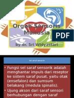 PPT Organ Sensoris (Anatomi Fisiologi)