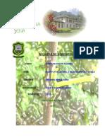 Informe de Ingles y Pua Lateral